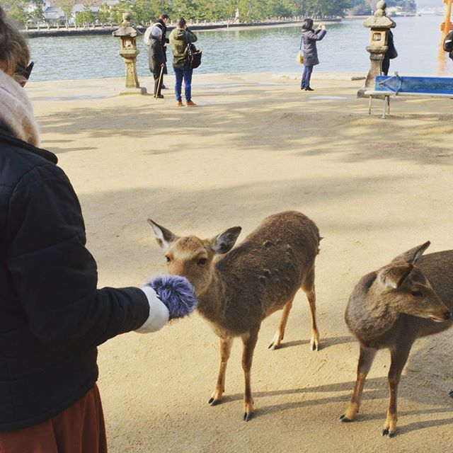 Deers being cute and making cute sounds into my zoom in Japan earlier this year 🦌🇯🇵 . . . . #sound #design #music #composer #film #tv #game #audio #post #production #recording #zoom #japan #deer #logic