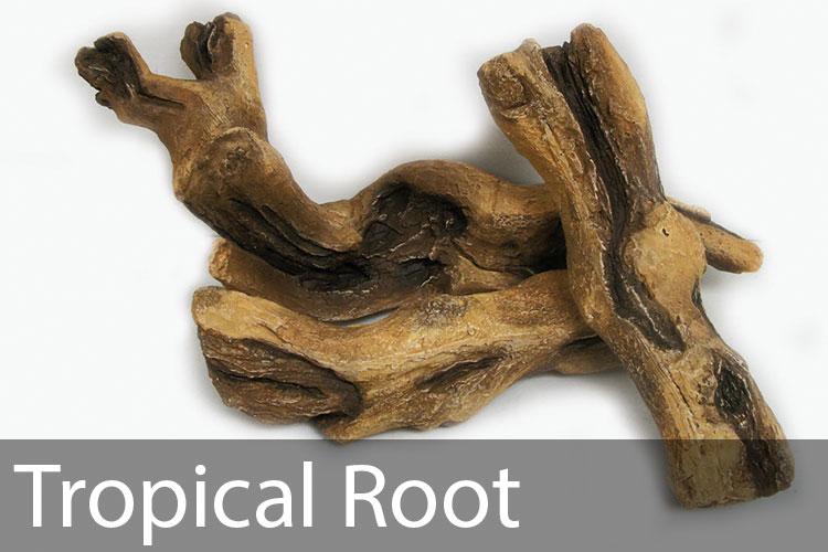 Tropical-Root.jpg