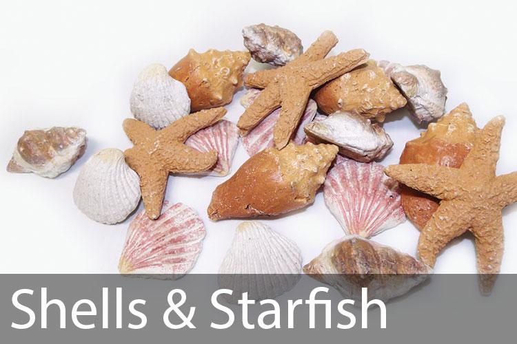 Shells-&-Starfish.jpg