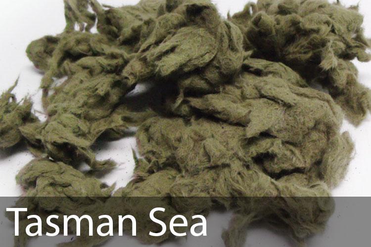Tasman-Sea.jpg