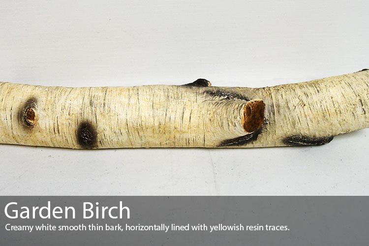 Garden-Birch.jpg
