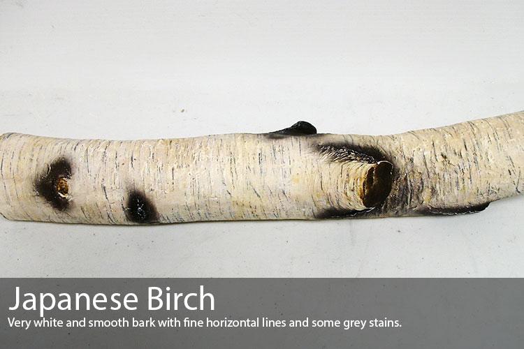 Japanese-Birch.jpg