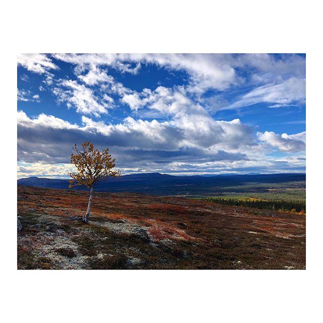 🌲Hyrstudion.com tycker som många andra att BLACK FRIDAY är en dålig idé av många anledningar så vi väljer att istället för att sänka priserna med 50% i stället skänka 50% av intäkterna för allt som bokas idag och under helgen till viskogen.se som planterar träd. Så passa på att boka till fullpris! Trevlig helg! @viskogen🎄
