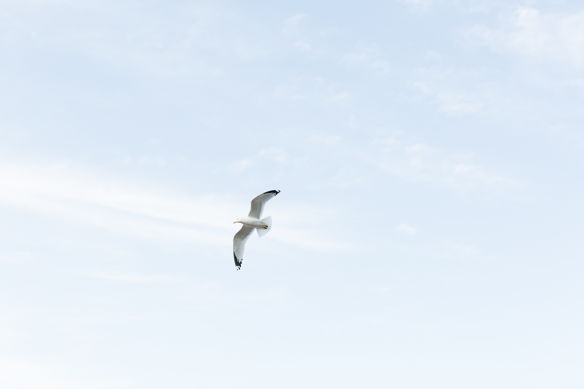 tobermory-16.jpg