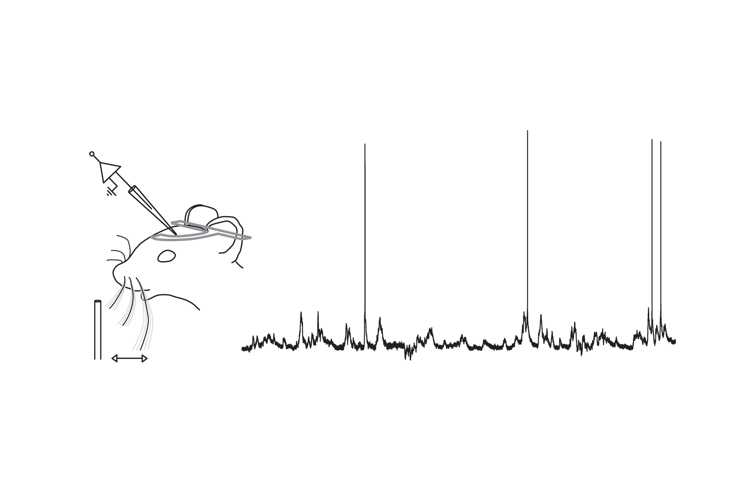mouse cartoon w pipette.jpg