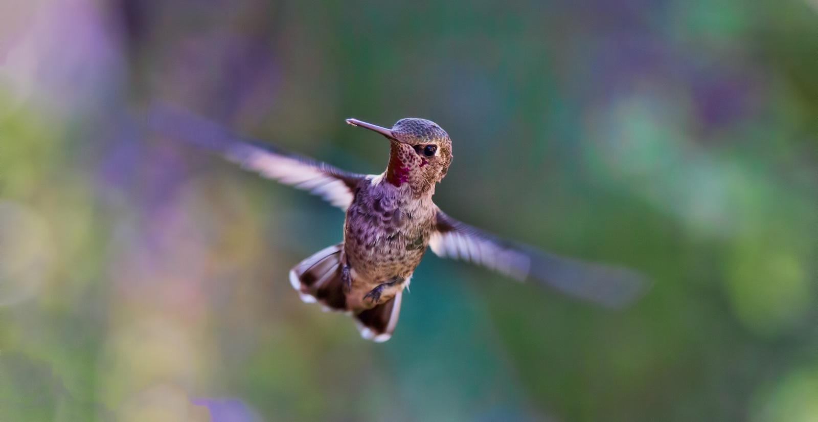 noise bird.jpg