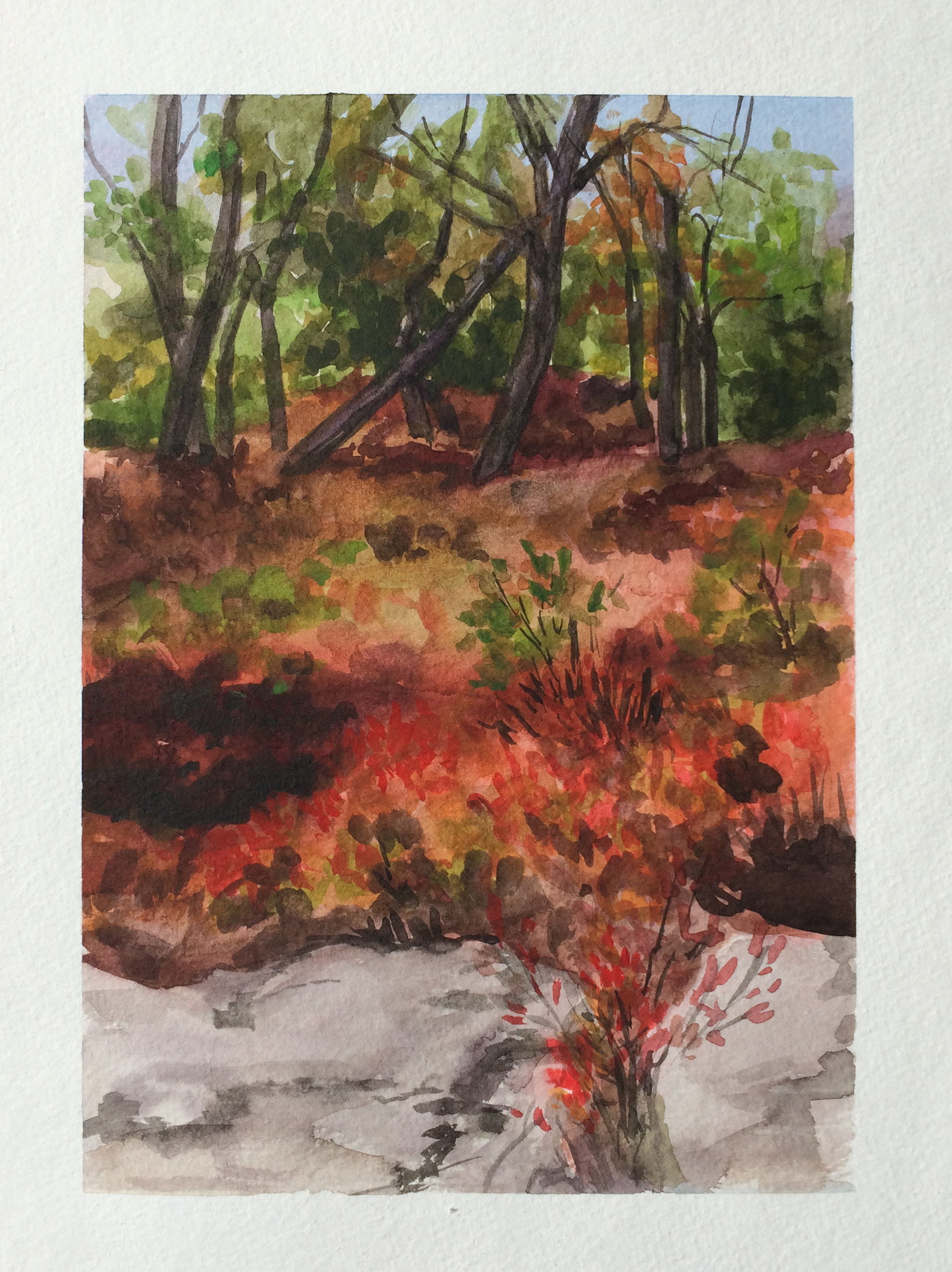 Fall Fire, The Gunks