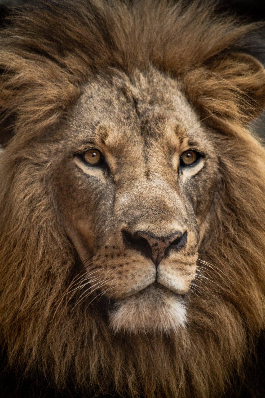 Leo Weekly Horoscopes