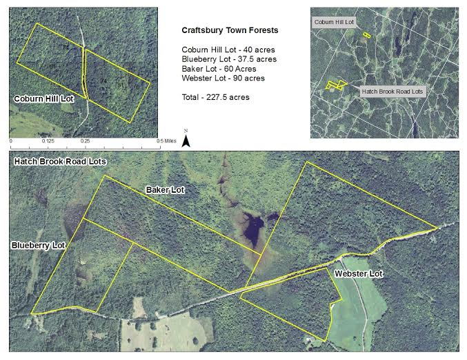 Craftsbury Town Forests