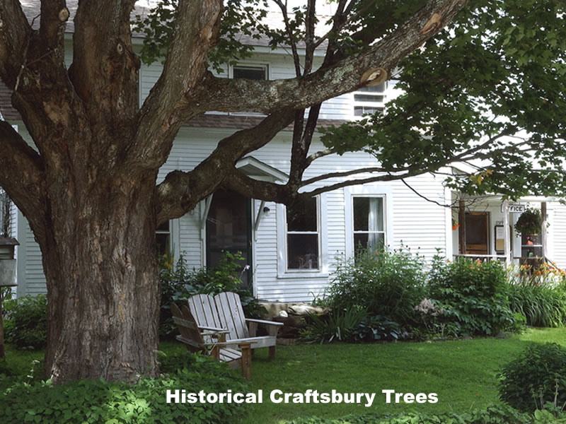 Craftsbury Trees