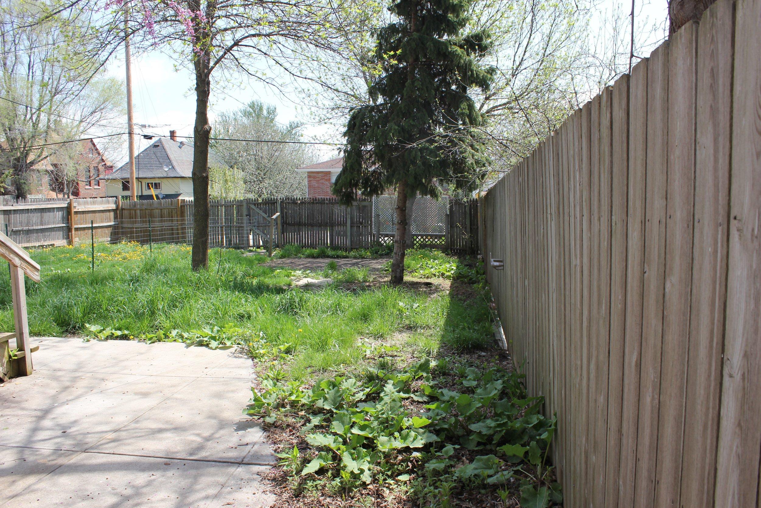 Backyard - 3.jpg