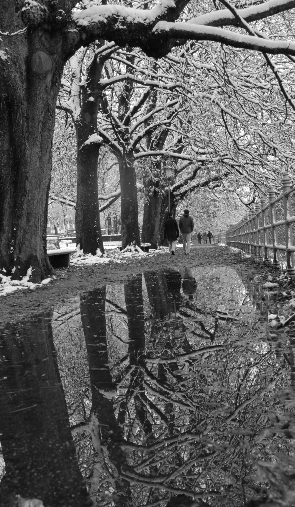 The trees along the Isar river covered with snow, Munich, Germany. Image©Maximilian Von Stetten