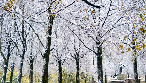The trees along the Isar river covered with snow, Munich, Germany. Image©gunjanvirk