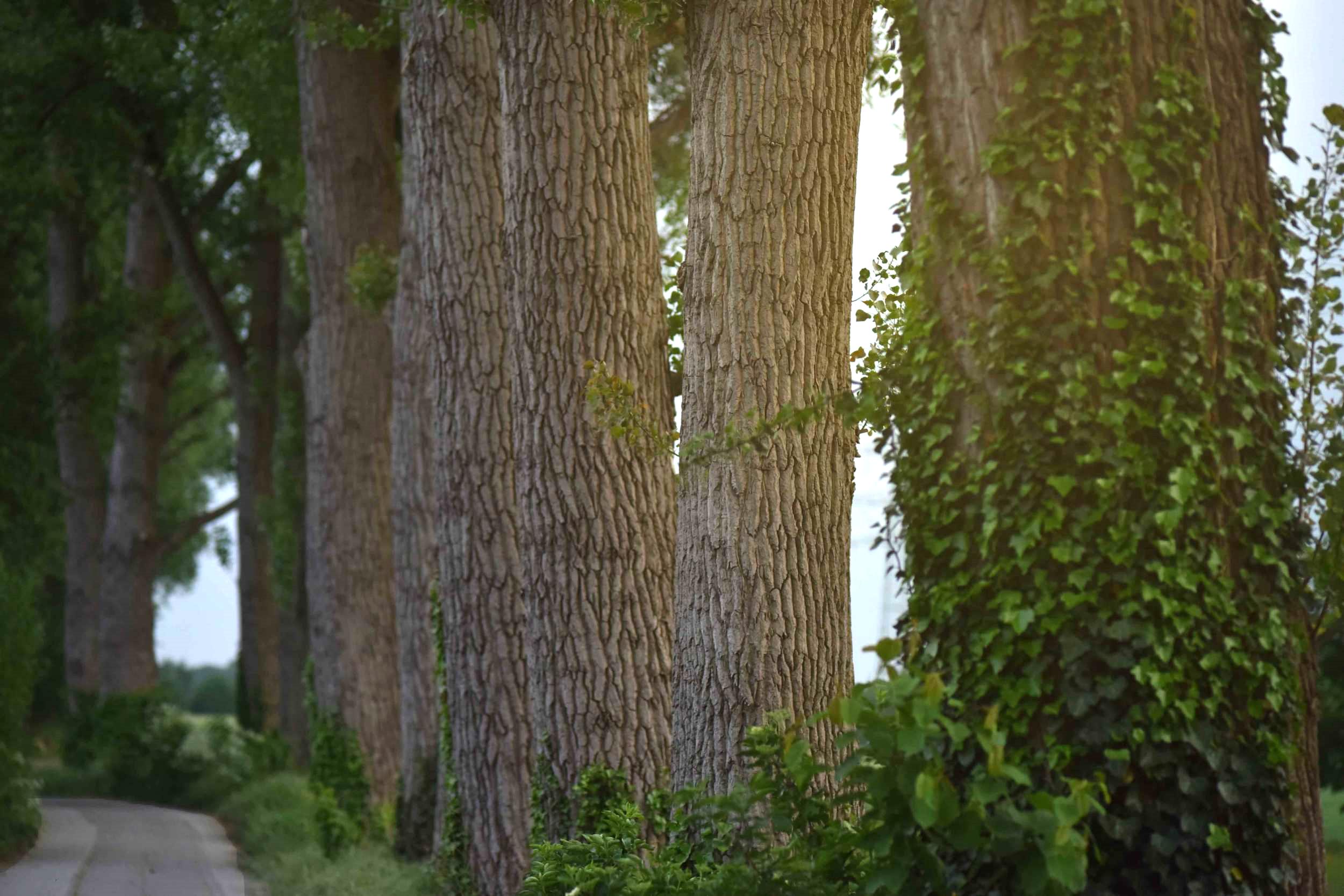 Larger than life trees, village near Düsseldorf, Germany. Photo: Nicola Nolting, Image©sourcingstyle.com