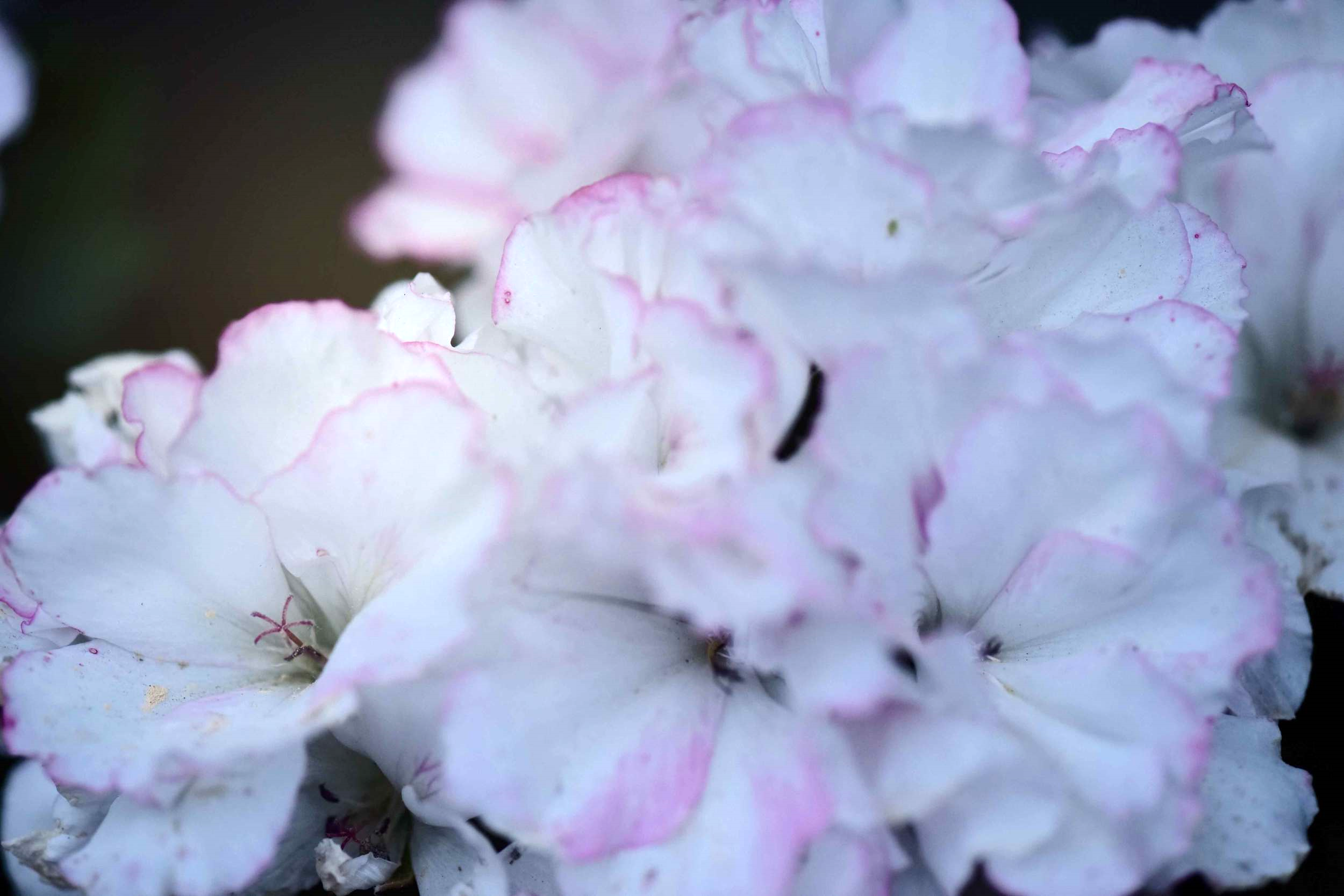 White and lilac flowers, Photo: Nicola Nolting, Image©sourcingstyle.com