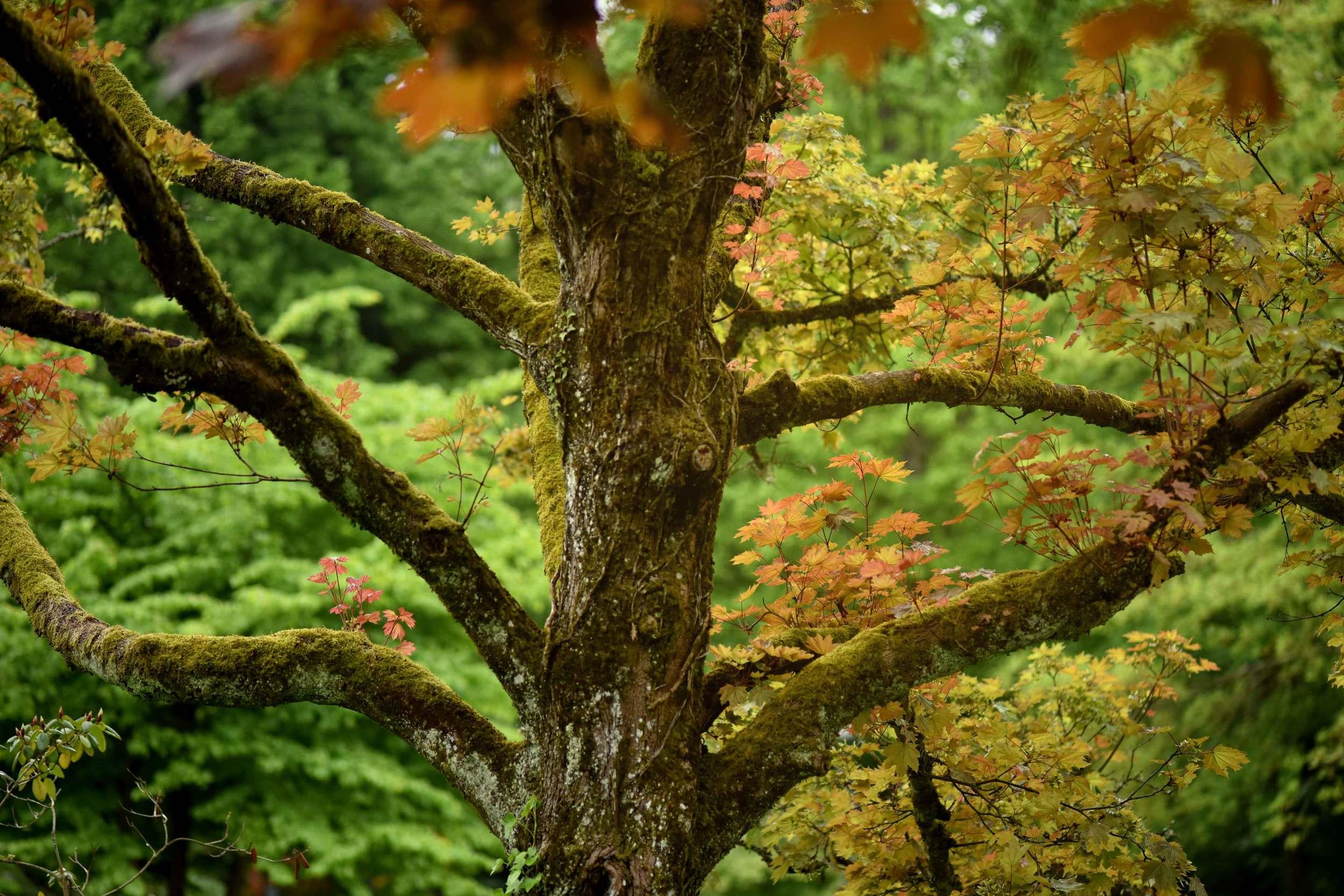 An ancient tree, Gönneranlage, historic park, Baden Baden, Germany. Image©sourcingstyle.com