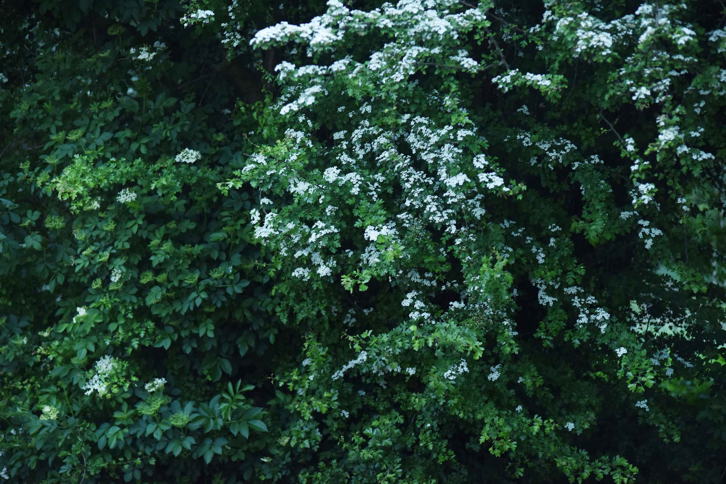 white flowers, spring blossoms. Image©sourcingstyle.com, photo: Nicola Nolting