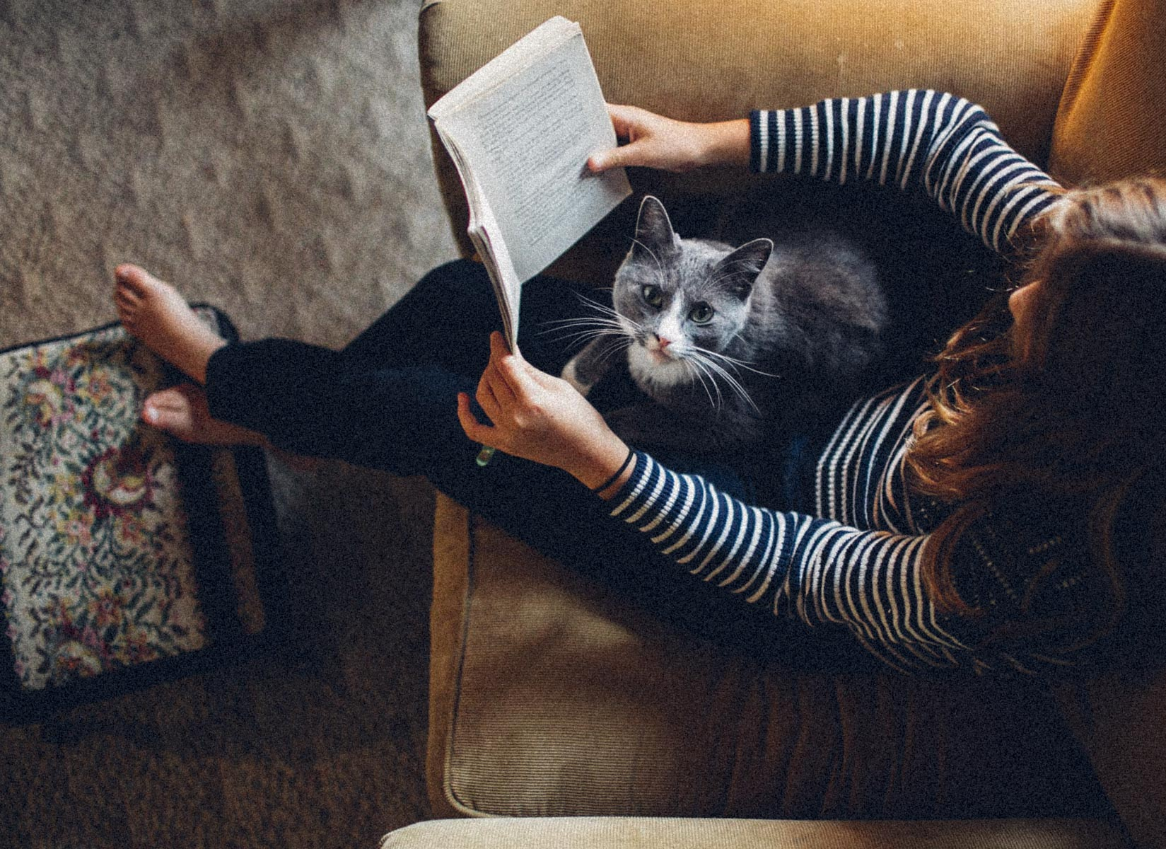 Meow-0165.jpg