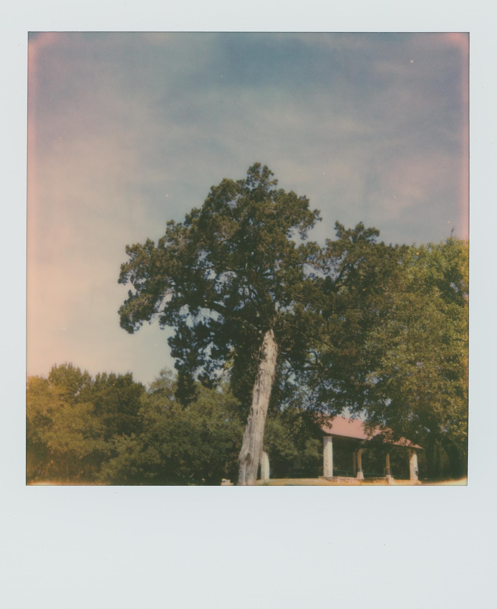 pola week tree (1 of 1).jpg