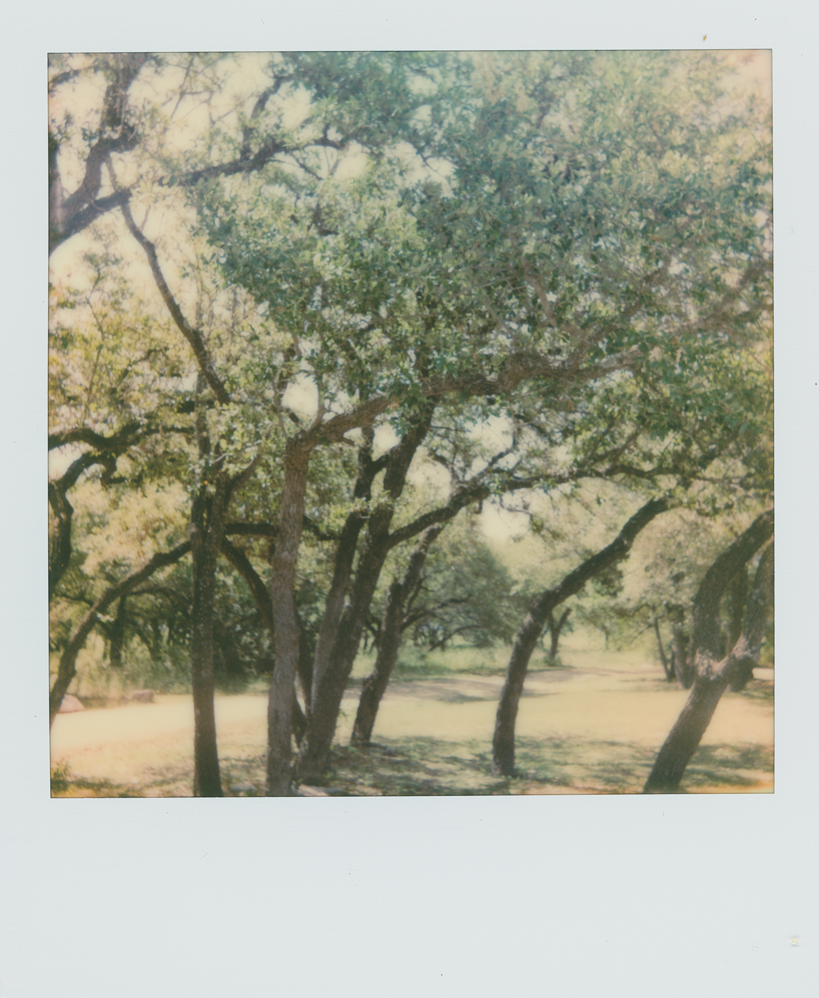 pola week trees (1 of 1).jpg