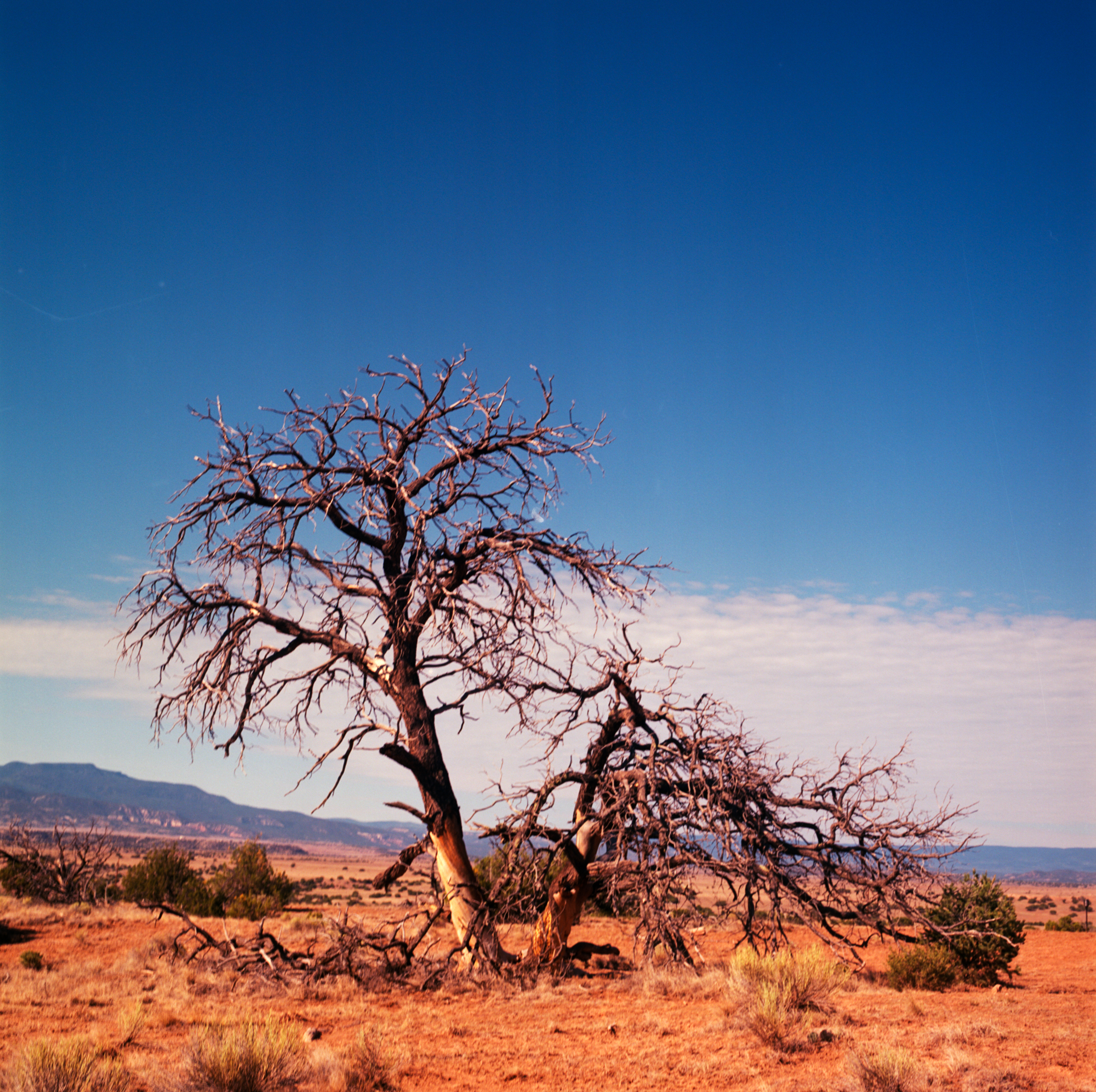 Ghost Ranch ektar 120 2018 (9 of 12).jpg