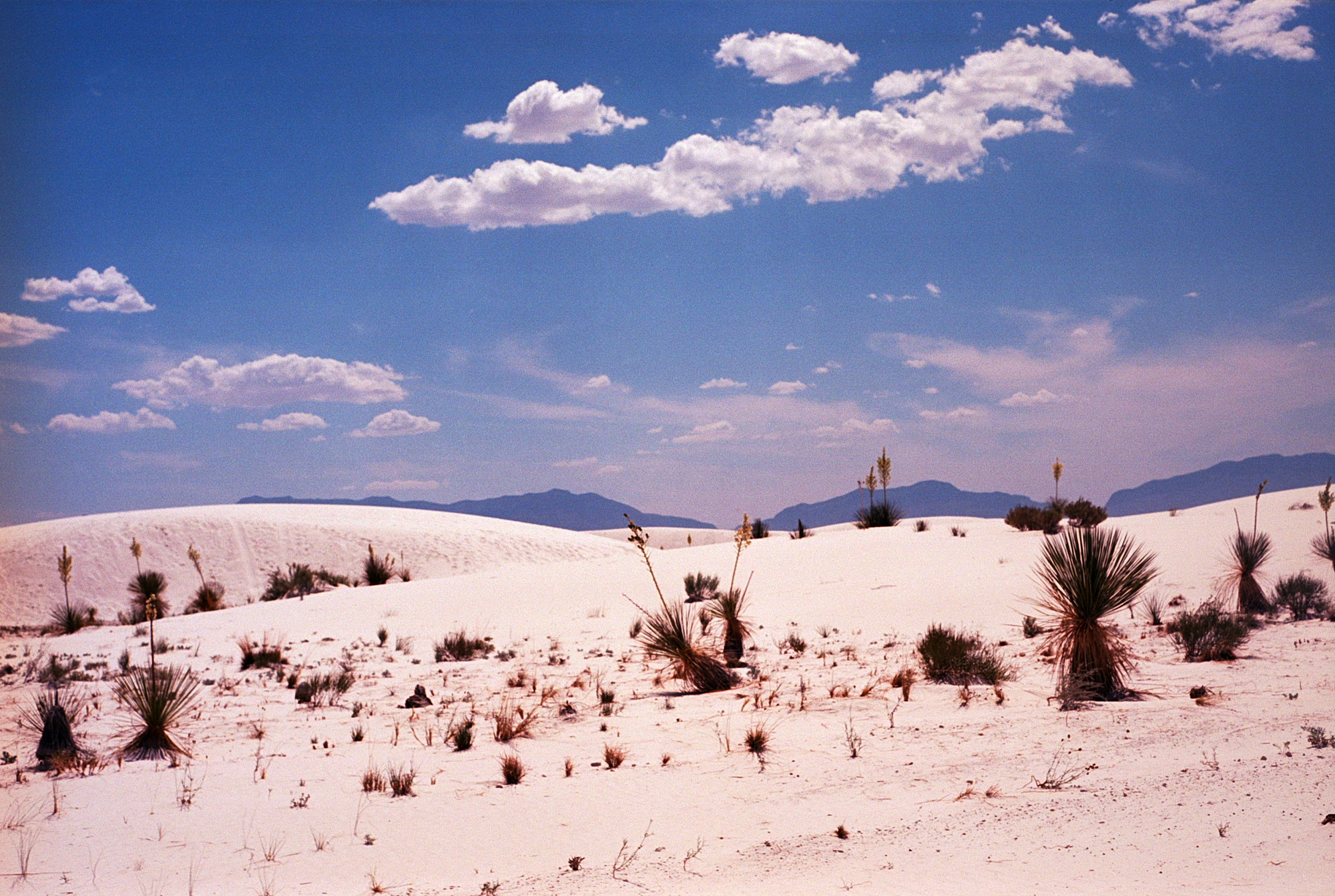 Into the West 2019 1 White Sands  (6 of 11).jpg