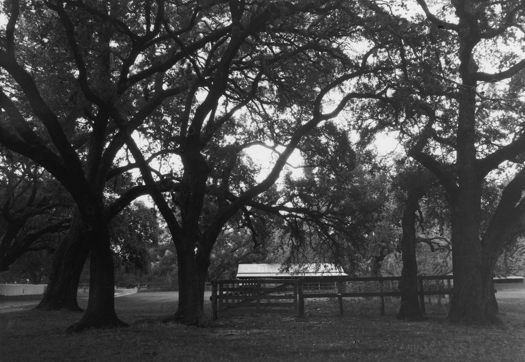 Johnson City June  Kodak 33a RC paper  (5 of 6).jpg