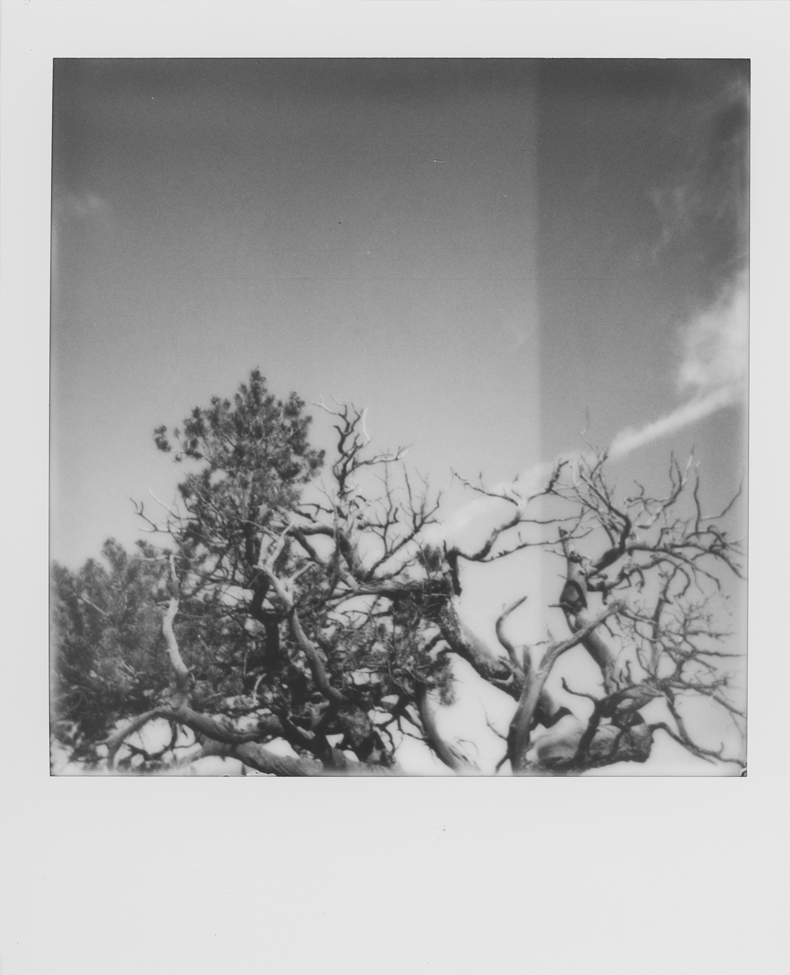 into the west Black Canyon of the Gunnison 2019 Polaroid b&w (6 of 7).jpg
