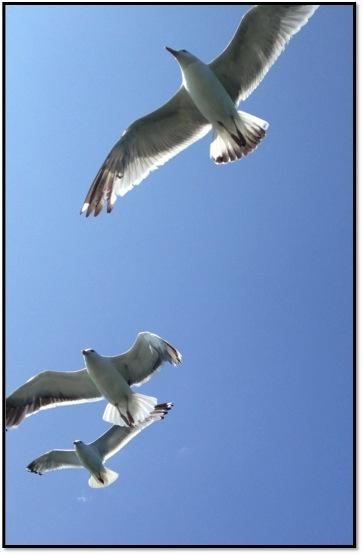 BC Birds.JPG