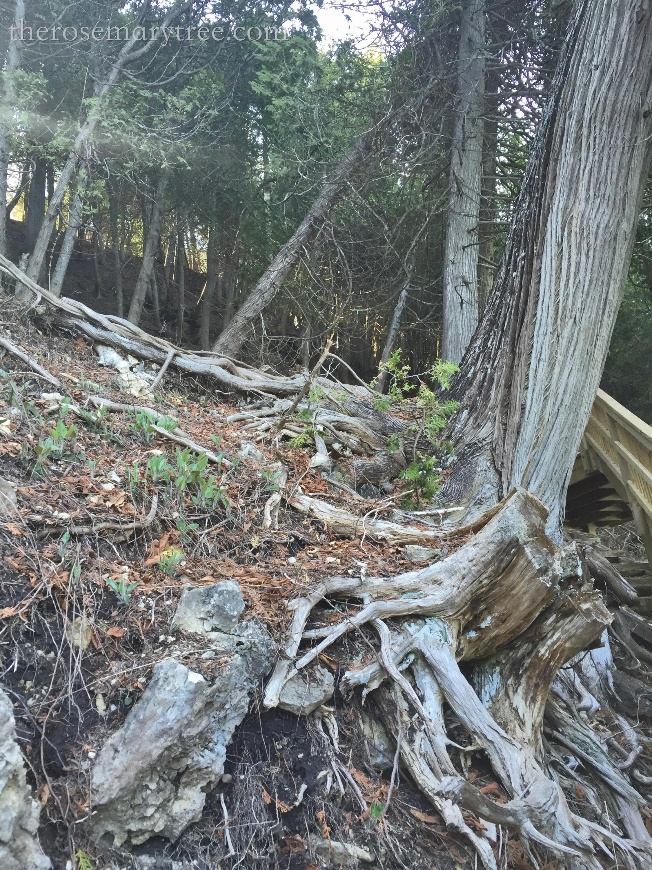 spillingtreeroots