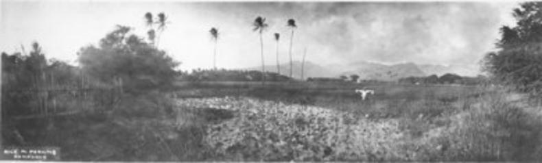 """ca 1900-uh library """"hawaiian photo album"""""""