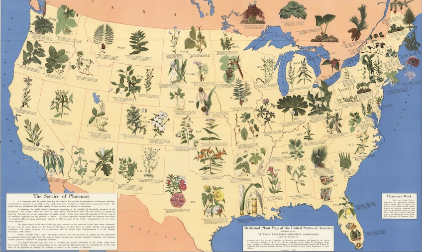 History of Medicinal Plans in the US