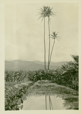 "ca 1935-uh library ""aloha Hawaii scrapbook"""