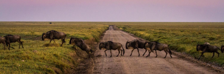safari vacaciones gnus