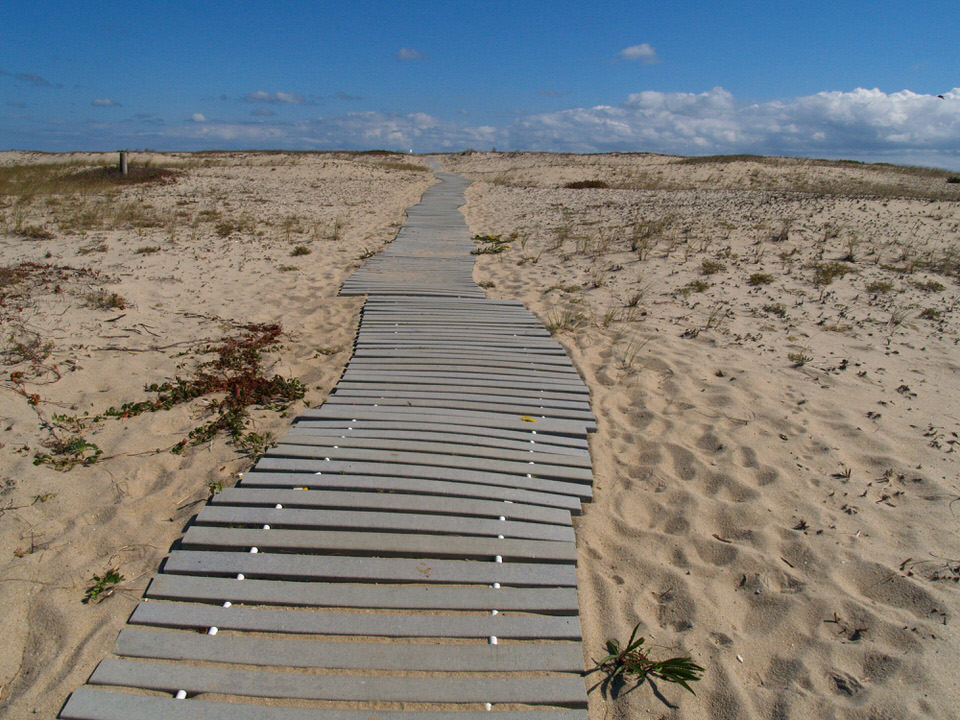 Trex path