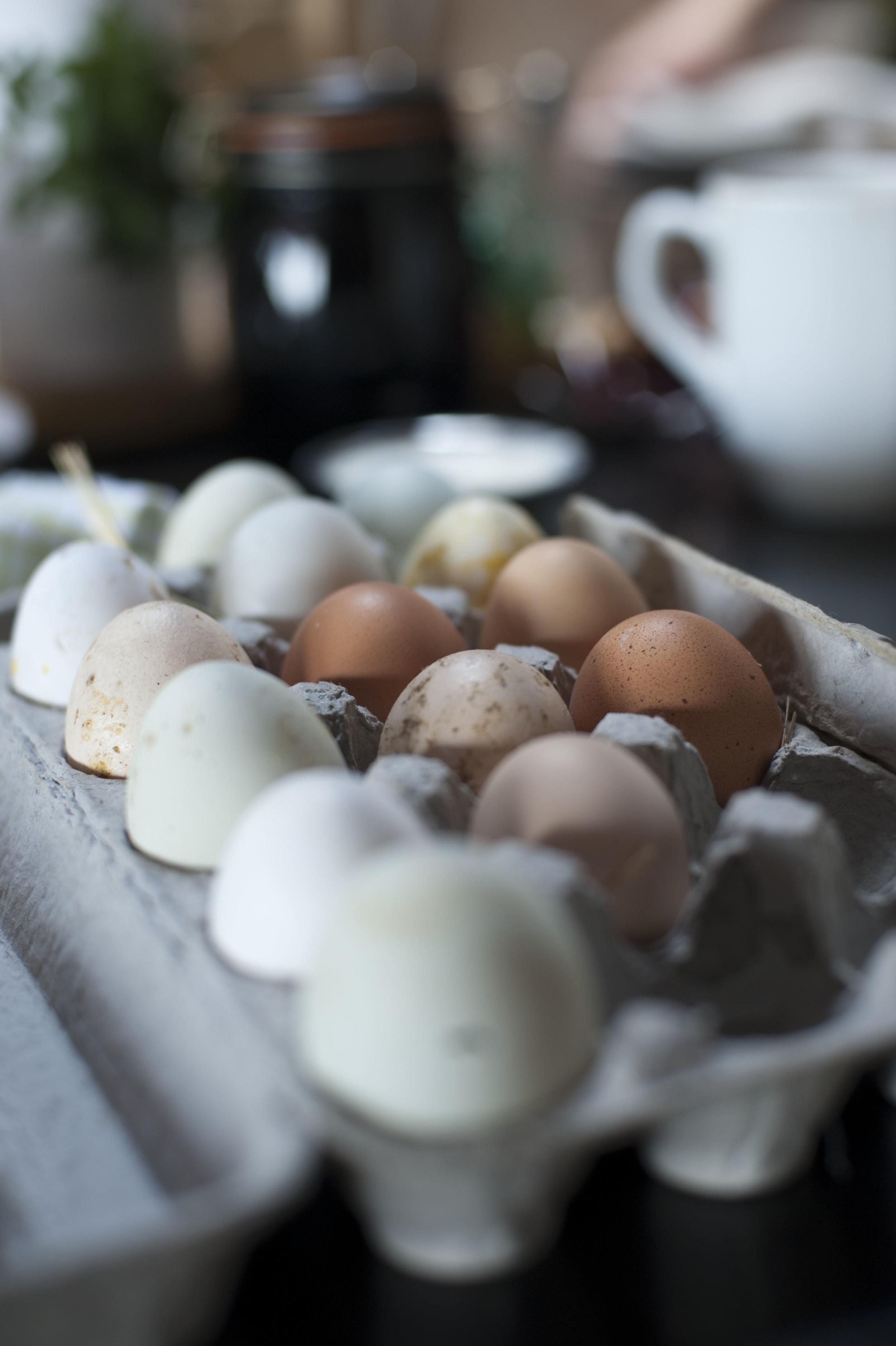 Fresh Lotus Chicken Eggs