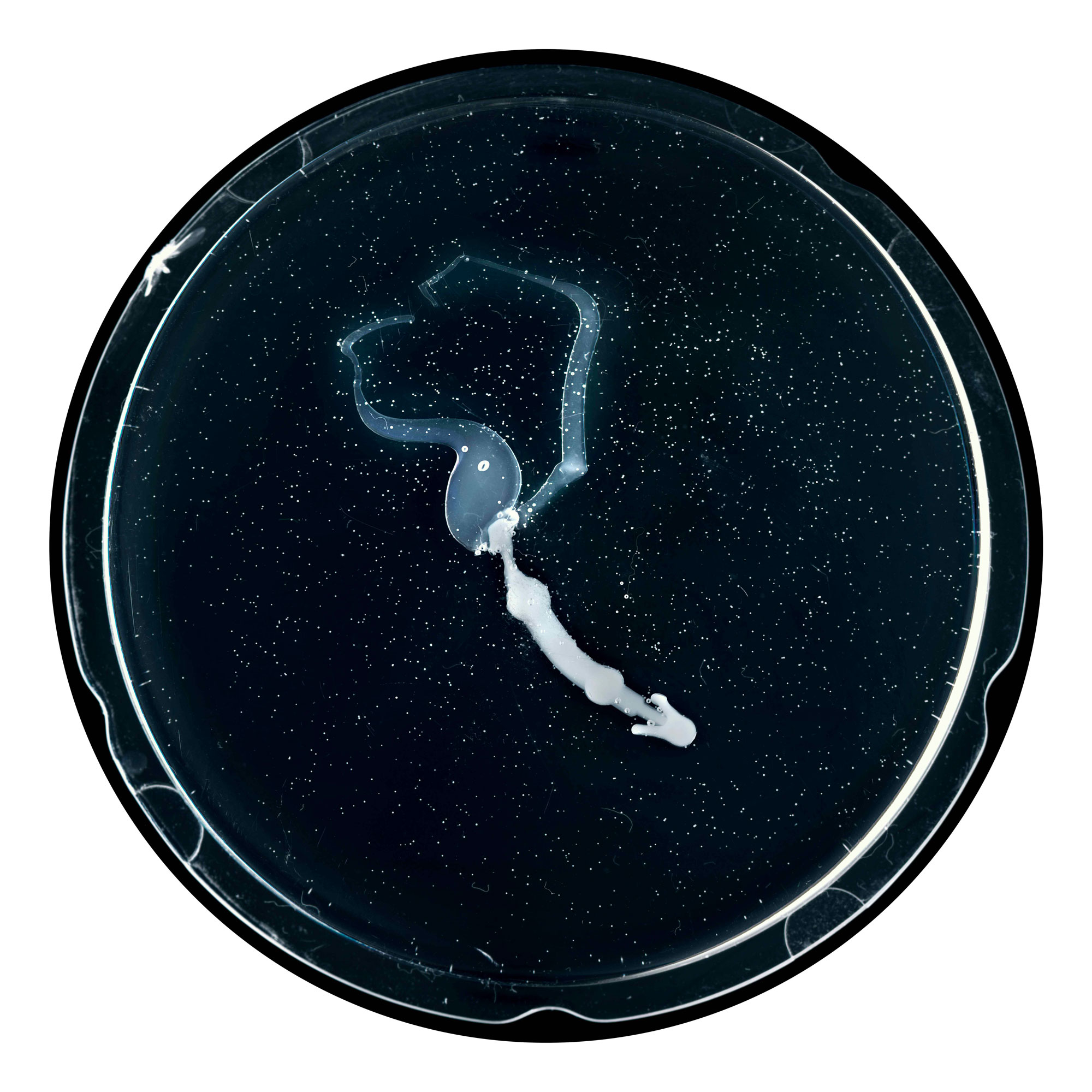 Embryon 4