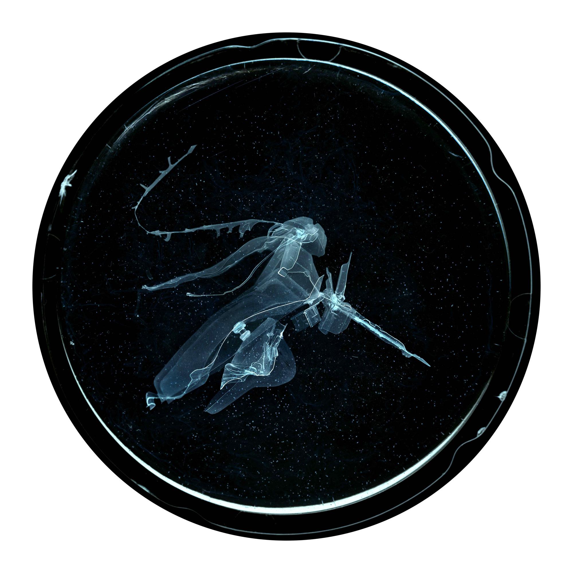 Embryon 6