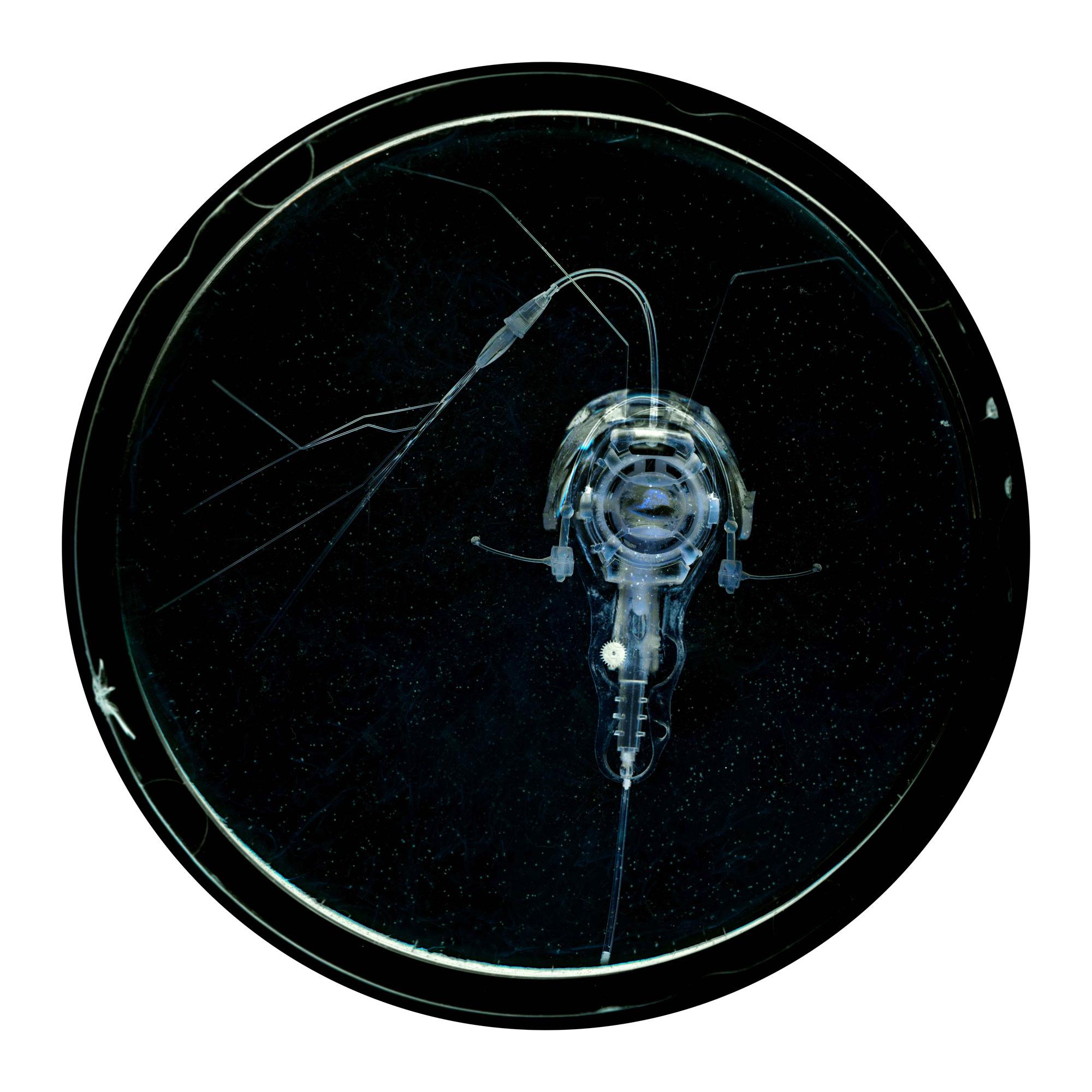 Embryon 8