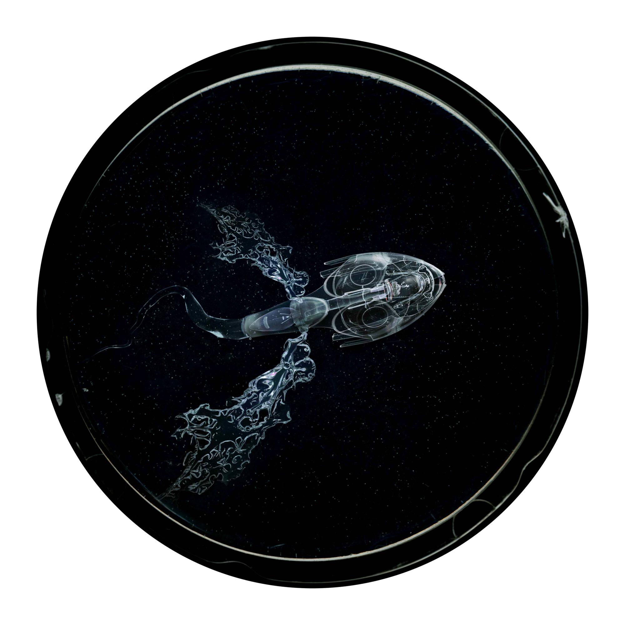 Embryon 11