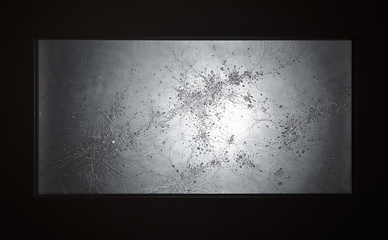 web1625.jpg