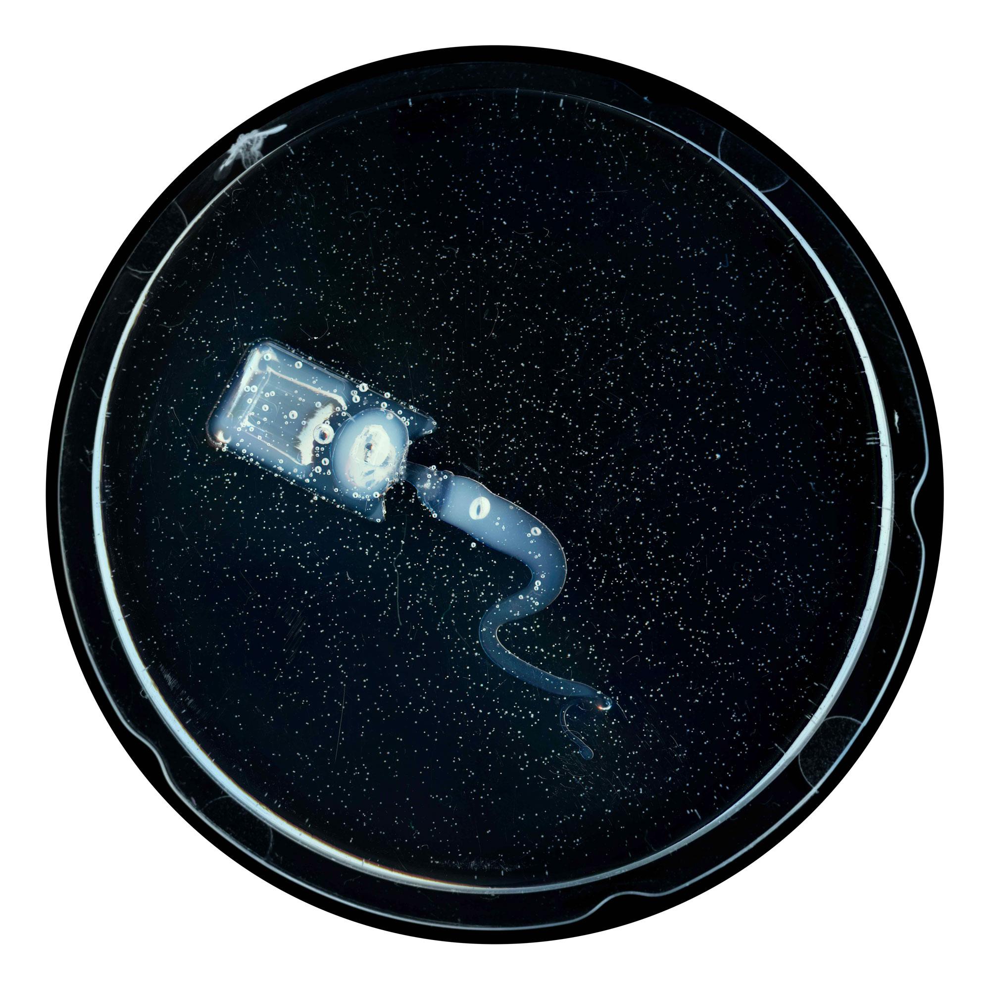 Embryon 3