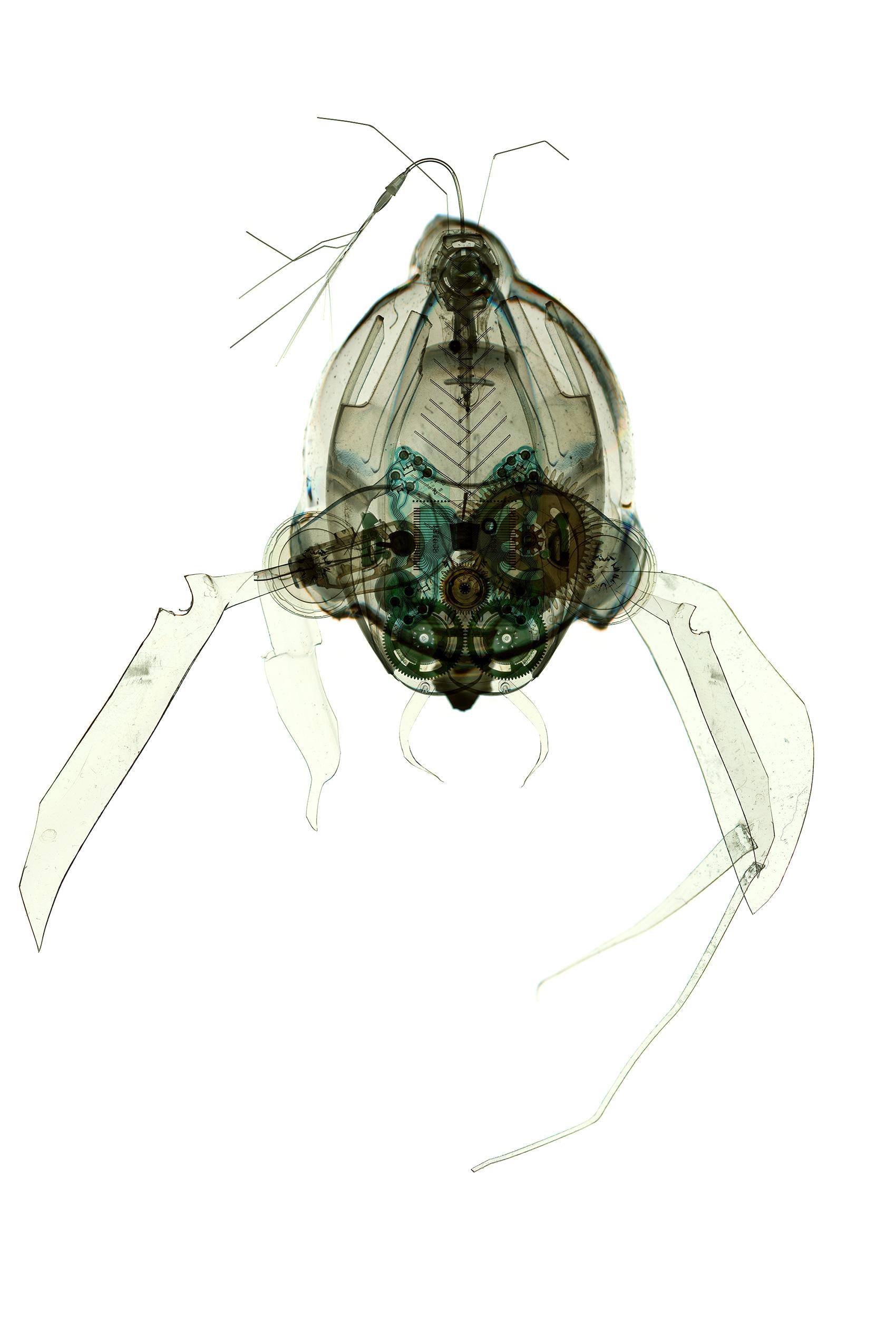 Vapoxis Protozoa
