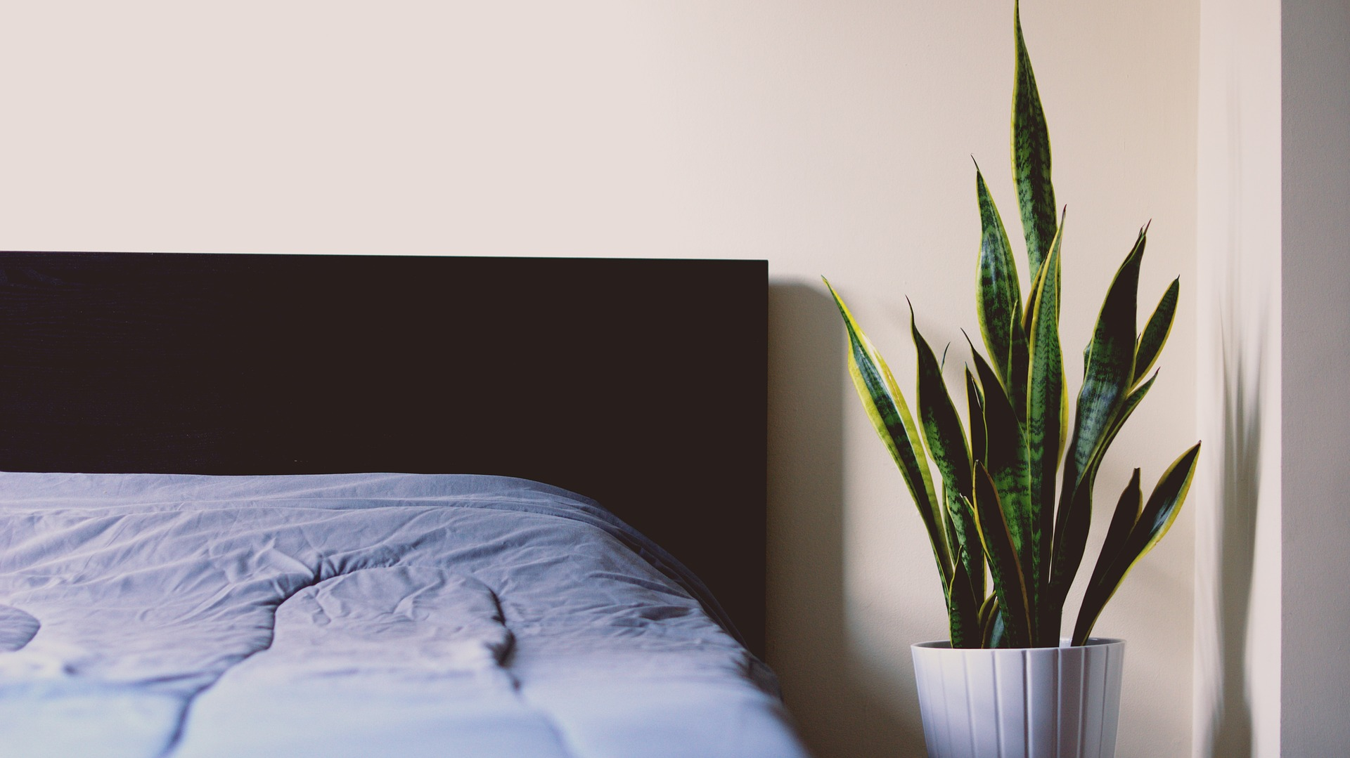 Bed with plant.jpg