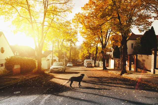 Tips for buying your first Rental Property Dog Crossing.jpeg