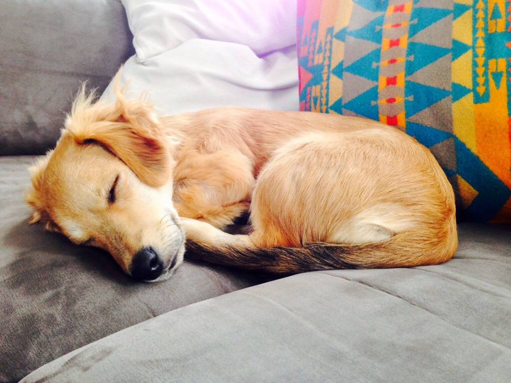 snoozin'