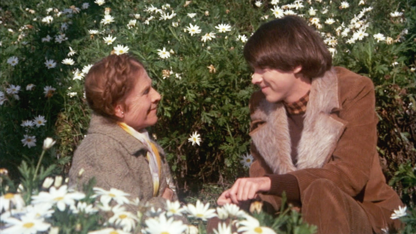 """""""I used to trust nobody, trusting even less their words/until I found somebody, there was no one I preferred."""" (Cat Stevens - """"I Think I See The Light,""""  Harold and Maude  OST)"""