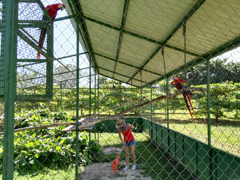 A volunteer helps to clean the release aviary
