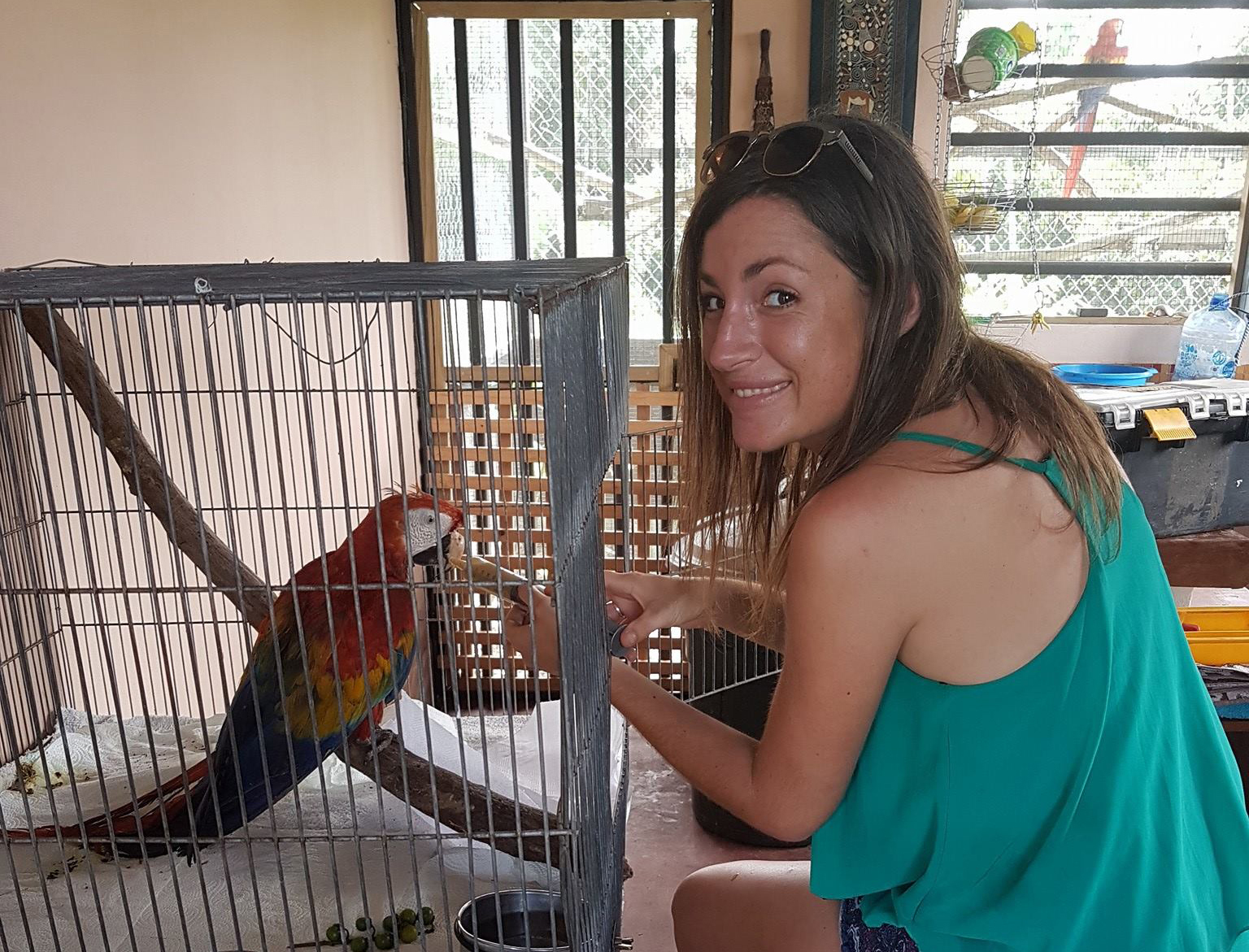 A volunteer helps to feed an injured macaw