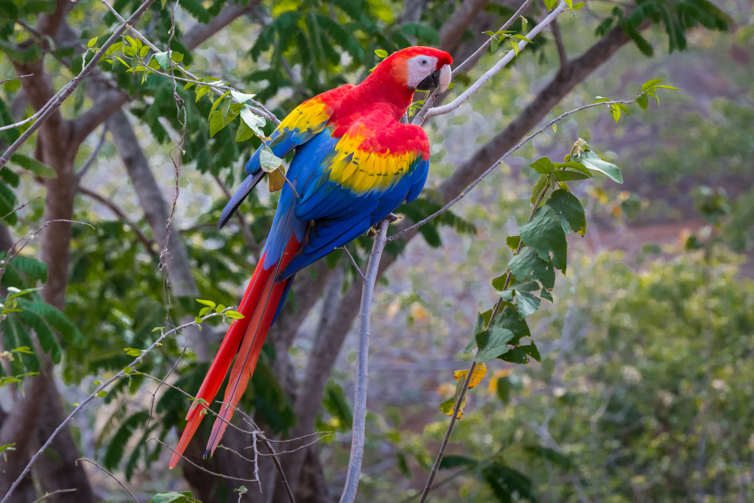 Our Team - is made up of international specialists in avian health & husbandry, alongside biologists & zoologists with combined experience of over 40 years working with parrots and macaws. See our staff & volunteers in action!